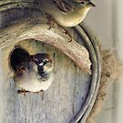 Courtship of Sparrows by milkayphoto