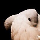 Coquettish by milkayphoto