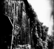 ivy laced tobacco barn by ShellyKay