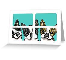 Boston Terriers in the Window Greeting Card