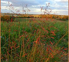 Grass is Grand by TrendleEllwood