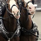Draft horses in competition by photobylorne
