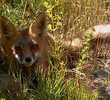 Shady Fox by JamesA1