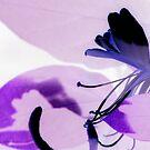 Purple Passion by Jennie L. Richards