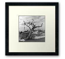 Hanging Tree -  Virginia City, Nevada Framed Print