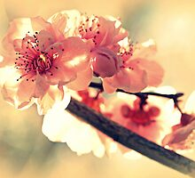 Spring of 2012 by Evita