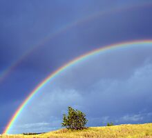 Double Rainbow by Debbie  Maglothin