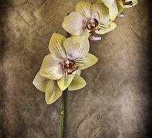 BEAUTIFULLY STILL by Rob  Toombs