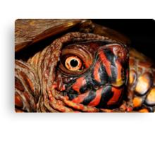 Darth Maul Turtle Canvas Print