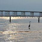 Bird in the water by Kajungurl
