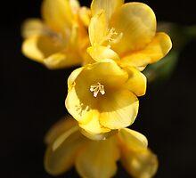 Dressed In Yellow by Joy Watson