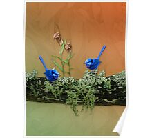 Blue Wren & Winter Orchids Western Australia Poster