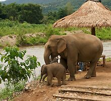 Elephants - Mother and Baby by Paris Franz