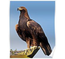 Claws (Golden Eagle) Poster
