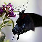 Fluttering Wings by John Dalkin
