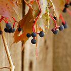 Hanging Grapes by Karen Jayne Yousse