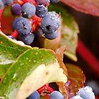 Dew Grapes by Karen Jayne Yousse