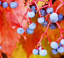 Vibrant Grape Vines by Karen Jayne Yousse