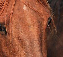 Horse hide by Jim Sauchyn