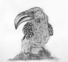 Yellow-Billed Hornbill by Mandevo