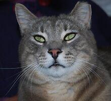 Fat Ferrel Cat. by Shanklinthomas