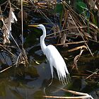 Wakodahatchi, Delray, FL by Shanklinthomas