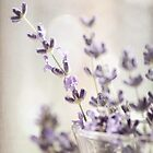 Sweet Lavender by Maria Medeiros