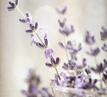 Sweet Lavender by ©Maria Medeiros