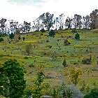 Hillside Pasture by cammisacam
