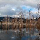 Lake Bellfield Grampians by Janette Rodgers