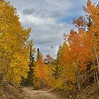Burning Orange and Gold Autumn Aspens Back Country Colorado Road by Bo Insogna