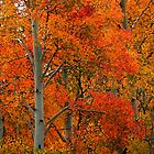 The Colors of Fall by Darcy Grizzle