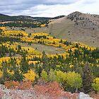 Colorado Autumn Aspen Colors by Bo Insogna