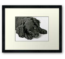 Very cute puppy Framed Print