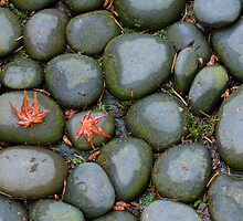 Two Red Leaves Cling to the Rocks by Don Schwartz