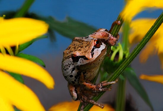 My Garden Frog by Tori Snow