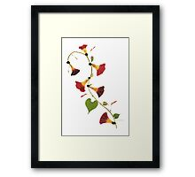 Kathie McCurdy Pressed Flowers Morning Glory Vine Framed Print