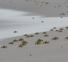 ghost crabs by wendy lamb