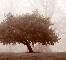 29.9.2012: Apple Tree in Autumn's Mist by Petri Volanen