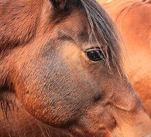 Horse's Head by Jim Sauchyn