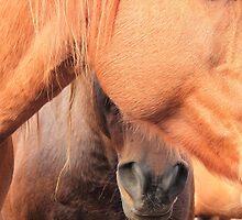 Horse Hides  by Jim Sauchyn