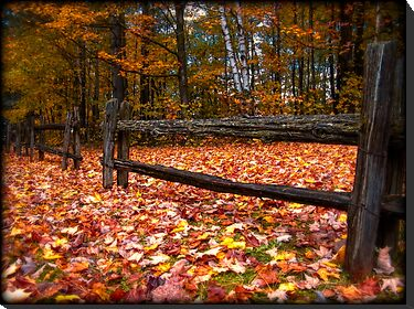 Cedar Log Fence on a Carpet of Autumn Leaves