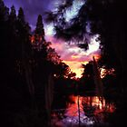 Sunset in Tampa by Vickie  Scarlett-Fisher