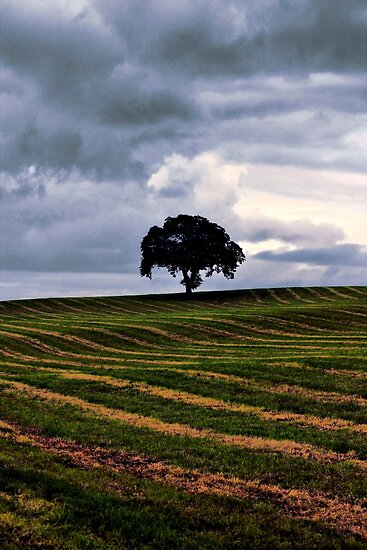 Lonely Tree by Jordan Moffat