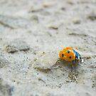 Ladybird by Keashav Chawla