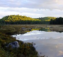 The Road to Openogo Lake, Algonquin Provincial Park- 6pm  by Tracy Faught