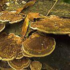 Fungi Pancakes by Thomas Eggert