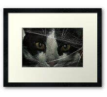 """"""" Here Mousey , mousey """" Framed Print"""