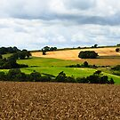 English Countryside - West Sussex, England by Jennifer Standing