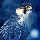 The Blue Falcon by clint hudson
